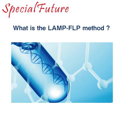 LAMP FLP