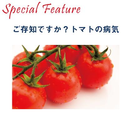 トマト黄化葉巻病とは