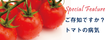 トマト黄化葉巻病